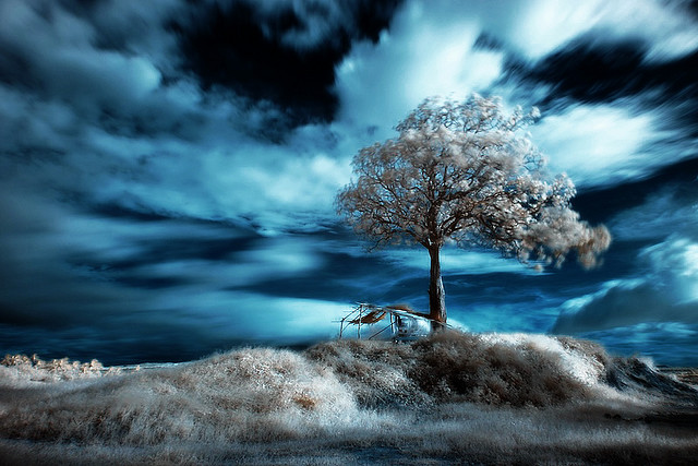 blue sky infrared photography21 45 Impressive Examples of Infrared Photography