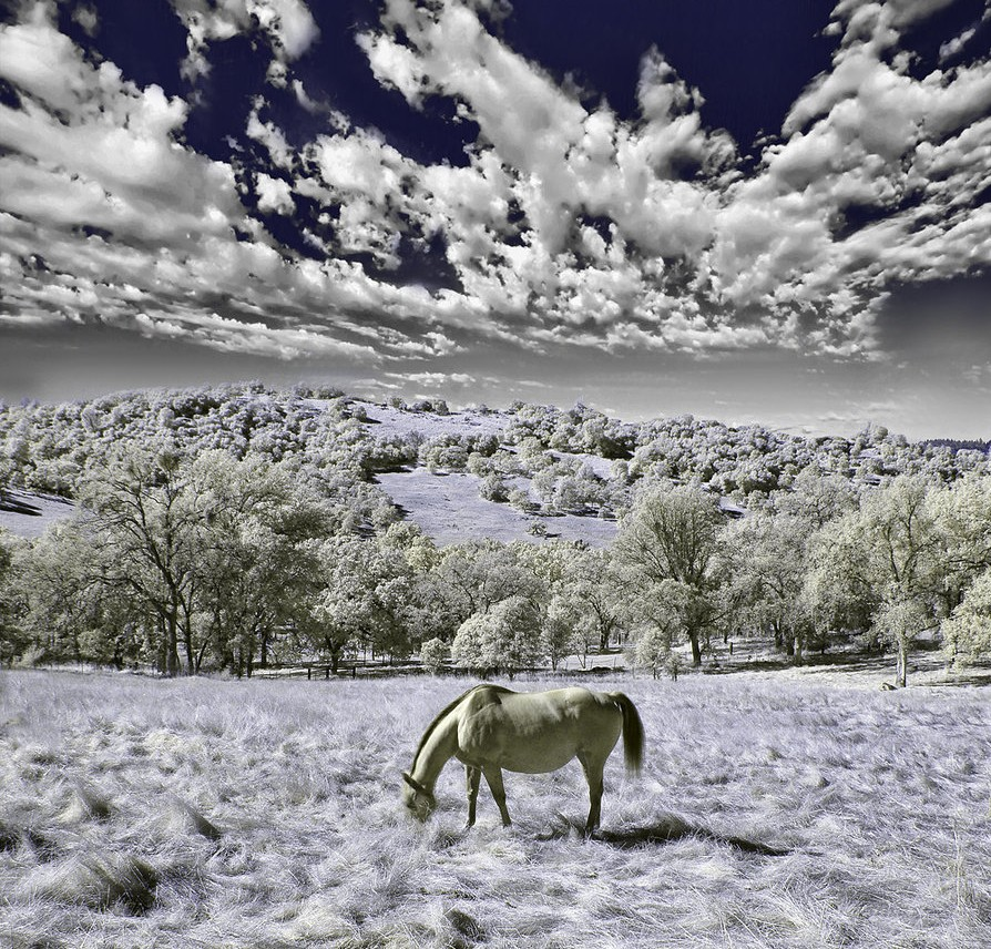 infrared horse11 e1317217806695 45 Impressive Examples of Infrared Photography