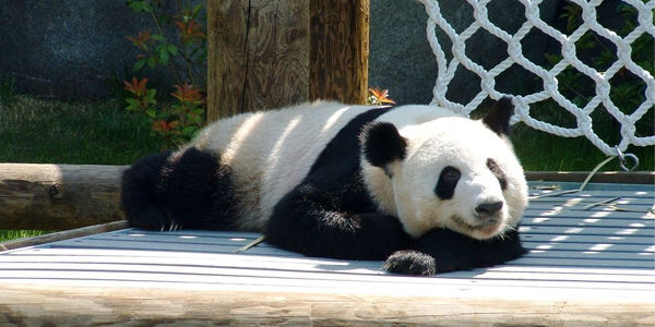 lazy panda You Will Find Blogging Difficult If…