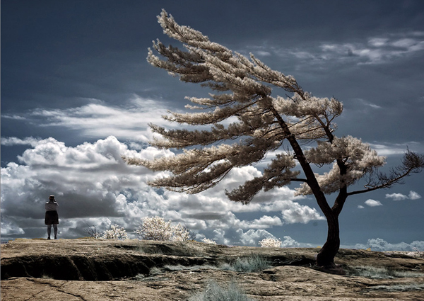 lone pine 45 Impressive Examples of Infrared Photography