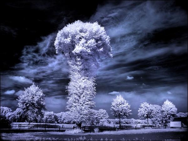 the mushroom tree infrared photography11 45 Impressive Examples of Infrared Photography