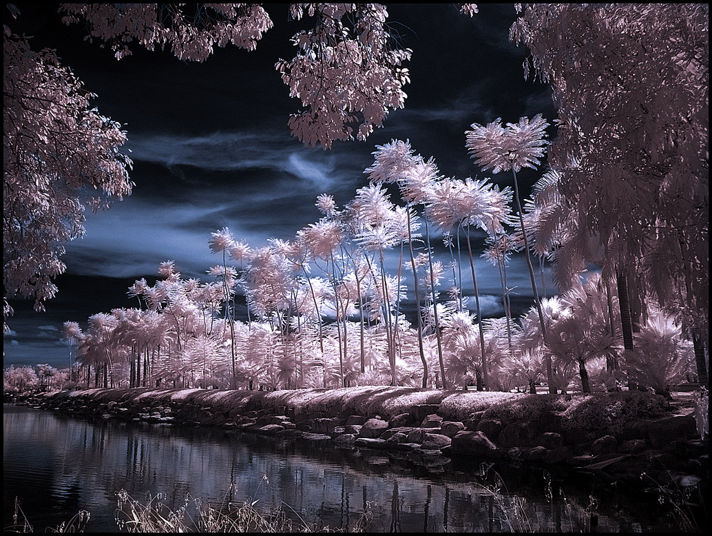 tropical garden infrared photography11 45 Impressive Examples of Infrared Photography