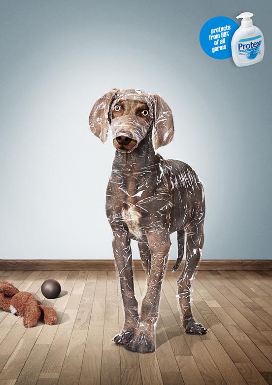 avvolto cane l1 55 Esempi Visionario di Creative Photography # 6