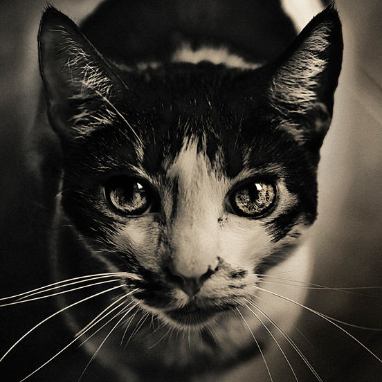 cat l1 50 Visionary Examples of Creative Photography #7