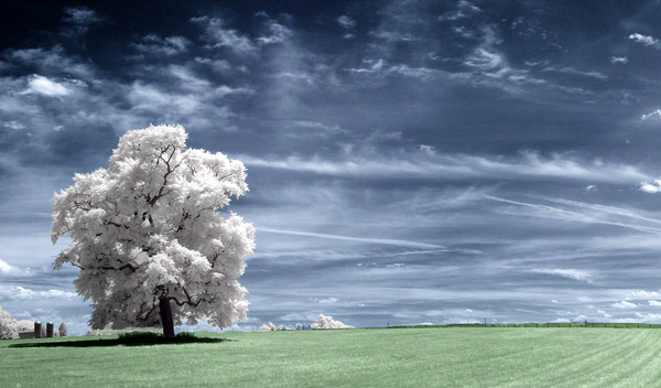 enhanced buzz 16038 1315243167 91 45 Impressive Examples of Infrared Photography