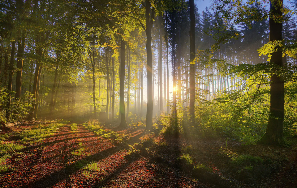 forest sunlight1 Jaw Dropping Photography from Around the World
