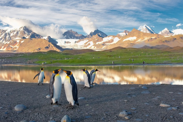 penguins in south georgia island1 Jaw Dropping Photography from Around the World