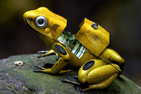 cyber frog by marochromix1 40 Entertaining Animal Photo Manipulations