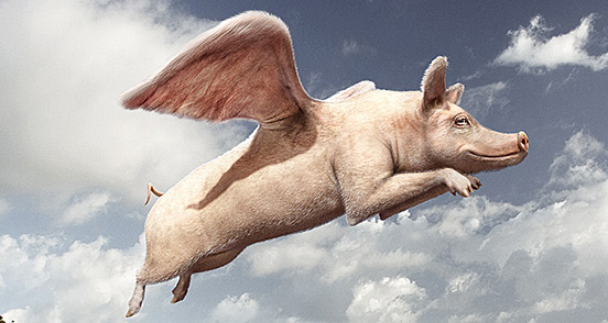 flying pig l1 40 Entertaining Animal Photo Manipulations