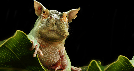 hippofrog l1 40 Entertaining Animal Photo Manipulations