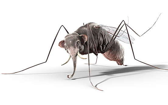mosquito l11 40 Entertaining Animal Photo Manipulations