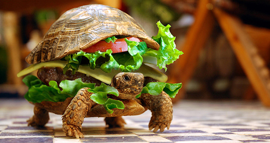 turtle burger l1 40 Entertaining Animal Photo Manipulations