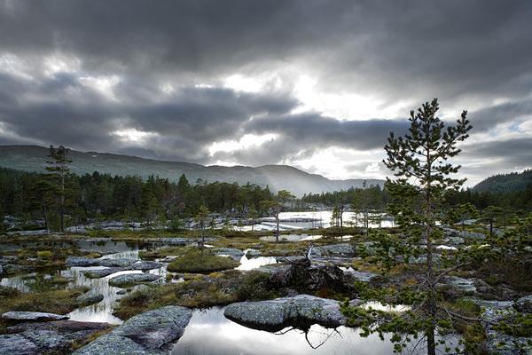 Nature Vs Landscape Photography