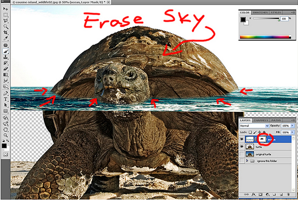 download12 Photoshop Tutorial: Underwater Turtle