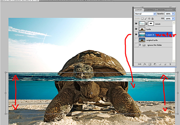 download14 Photoshop Tutorial: Underwater Turtle