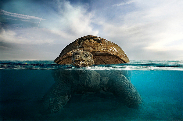 download20 Photoshop Tutorial: Underwater Turtle