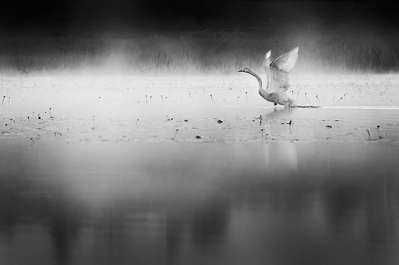 truemagic1 Emotional Photography by Mikko Lagerstedt