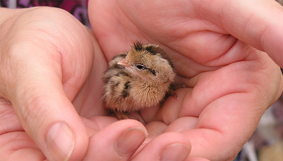 chick l1 45 Cute Animal Photos That Will Cheer You Up!
