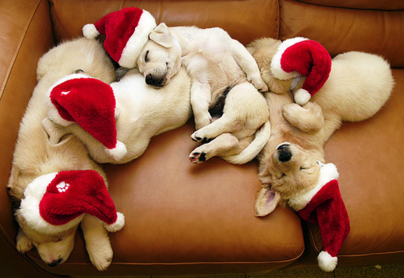 christmas in advance l1 45 Cute Animal Photos That Will Cheer You Up!