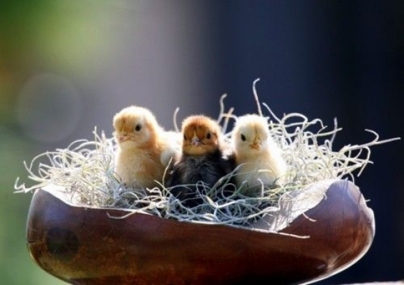 l a nest rest1 45 Cute Animal Photos That Will Cheer You Up!