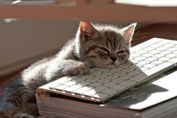 l computers are so boring 1 45 Cute Animal Photos That Will Cheer You Up!
