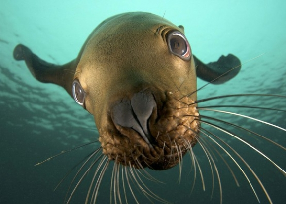 l sea lion1 45 Cute Animal Photos That Will Cheer You Up!