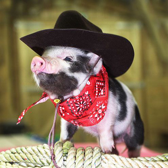 they call me billy the pig l1 45 Cute Animal Photos That Will Cheer You Up!