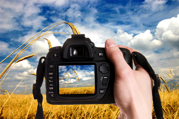 photo nature 10 Quick Ways To Learn Photography