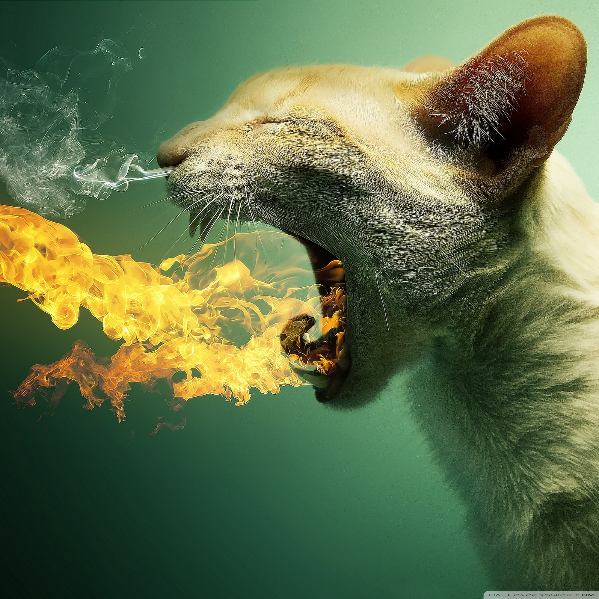 flaming cat wallpaper 2048x2048 40 Free HD Retina Display iPad 3 Wallpapers