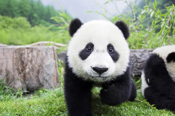 google panda 5 Changes in Google Panda 3.2 Update