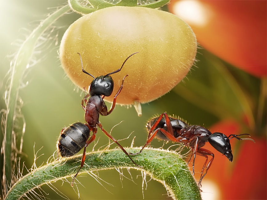 picturecontent pid 31fb2 Ant Tales by Andrey Pavlov