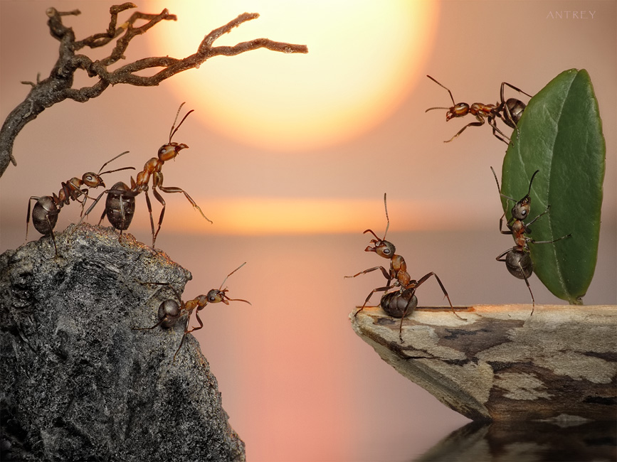 picturecontent pid 3b16a Ant Tales by Andrey Pavlov