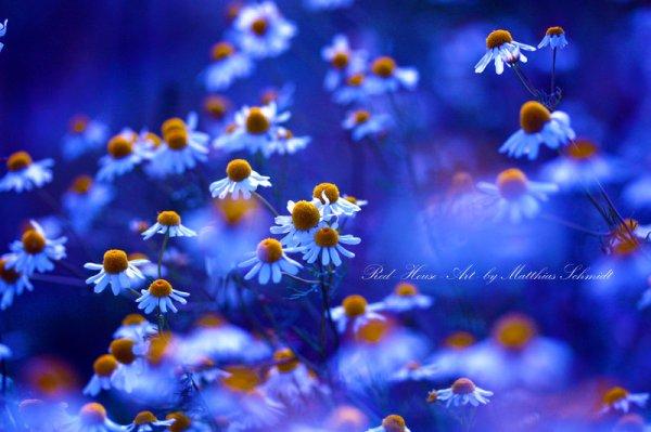 Blue Summer Hour