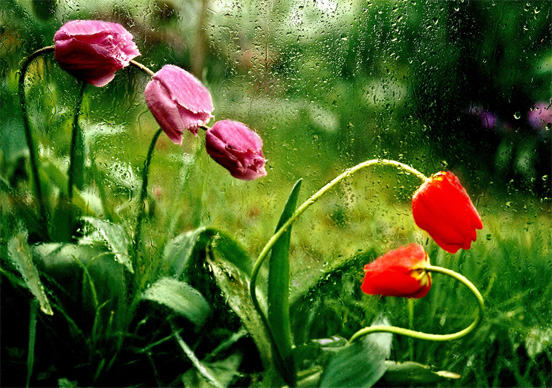 rain photography 26 50 Examples of Rain Photography to Lay Aside Your Sadness