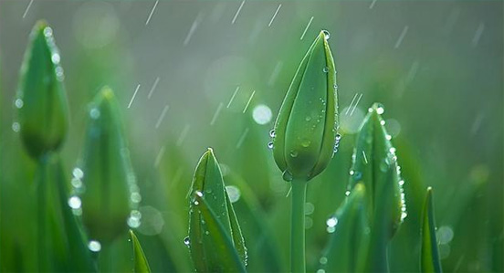 rain photography 44 50 Examples of Rain Photography to Lay Aside Your Sadness