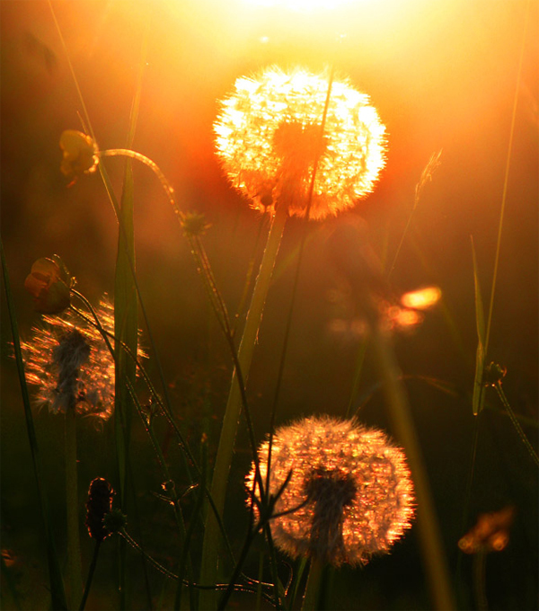 Summertime-by-Birgit-Cathrin-Duval