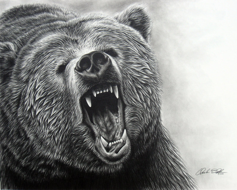 Grizzly Bear ROAR II