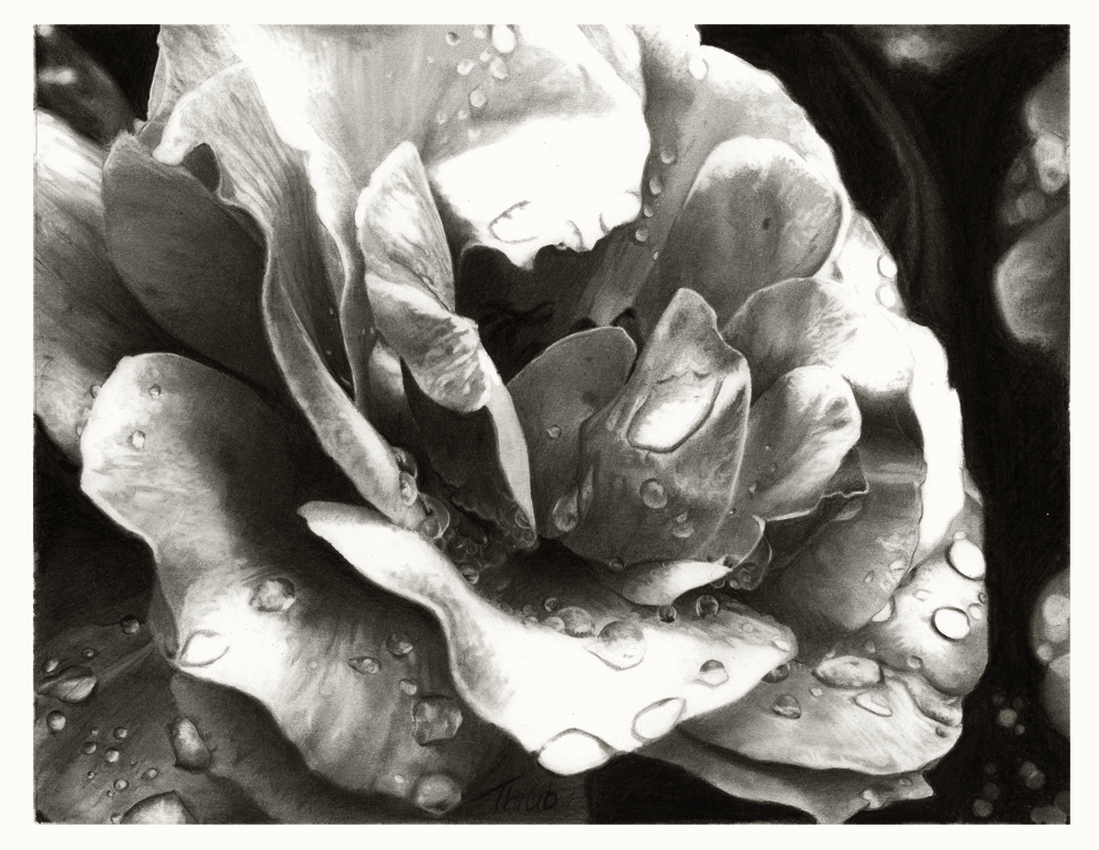 rose at morning by thubakabra d3jl1t21 35 Mindblowing Realistic Pencil Drawings