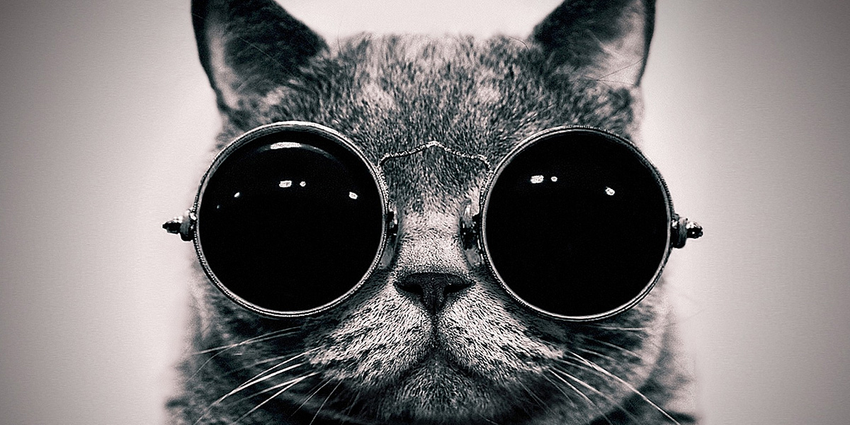 glasses cat1 40 Free and Beautiful Twitter Covers