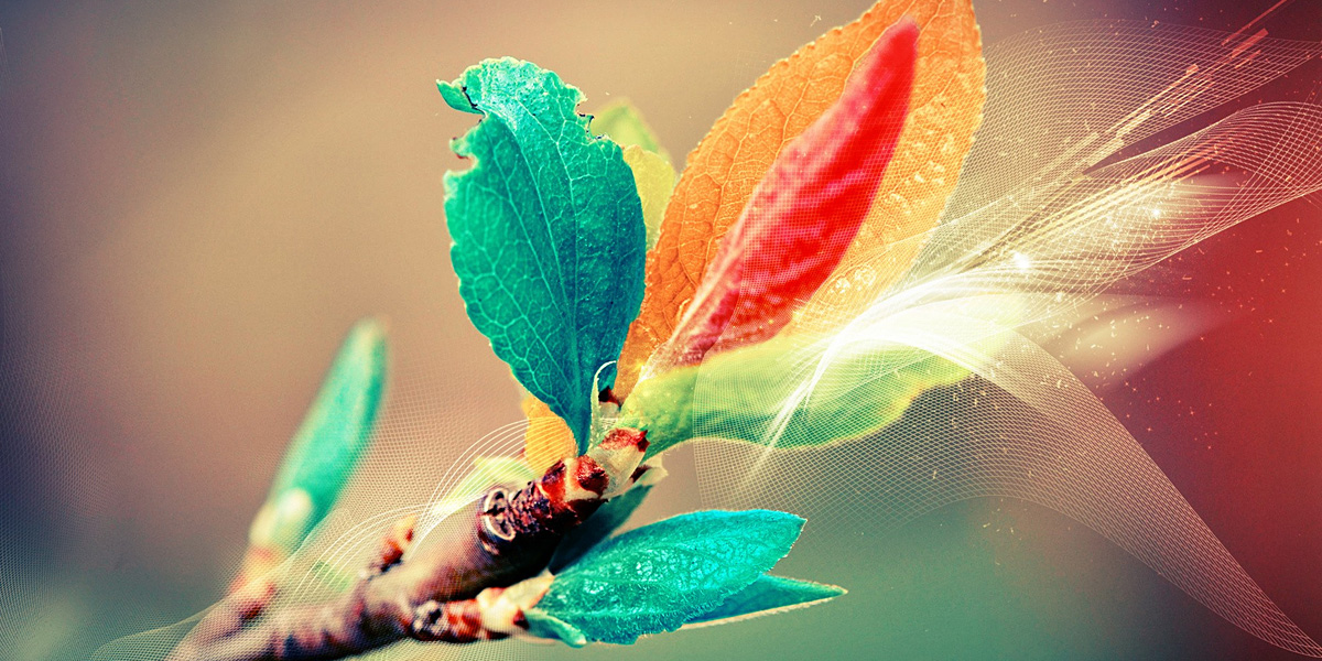 leaves1 40 Free and Beautiful Twitter Covers