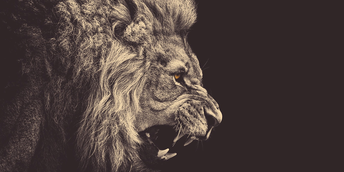 lion1 40 Free and Beautiful Twitter Covers