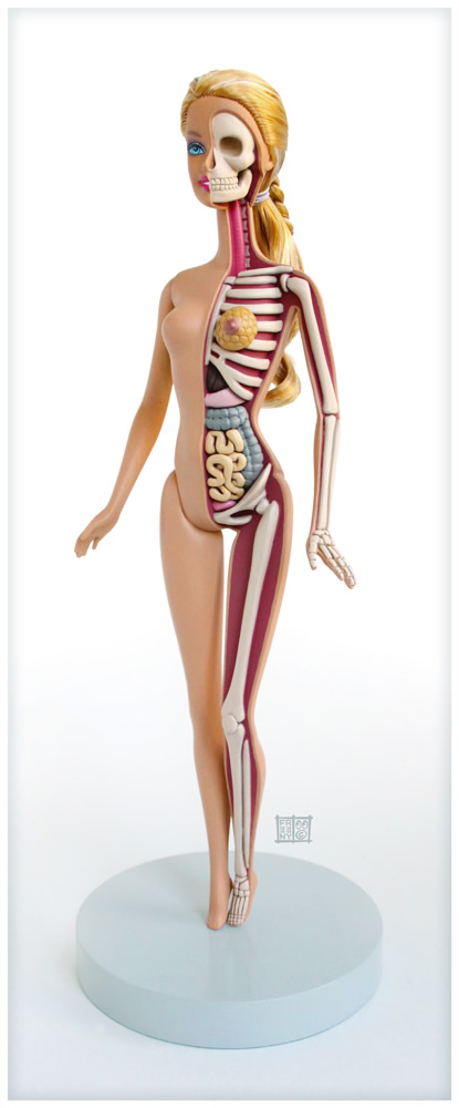 barbie anatomical model 324678717 Creative Character Anatomy Sculptures by Jason Freeny