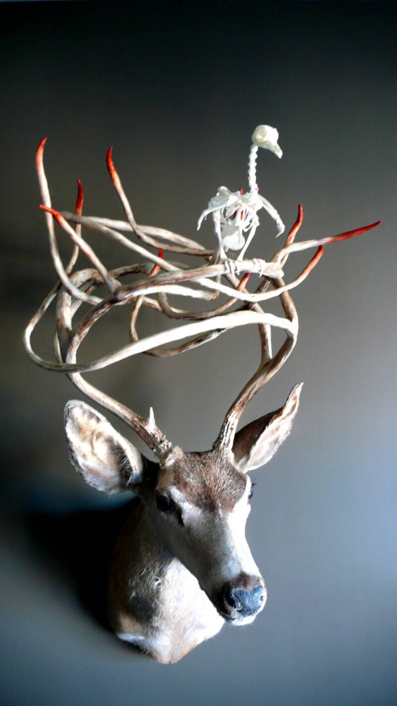 deer 009 op 1800x1422 Unique Taxidermy Sculptures by Peter Gronquist