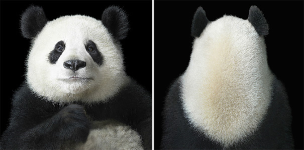 more than human animal photography tim flach 10 More Than Human Project by Tim Flach