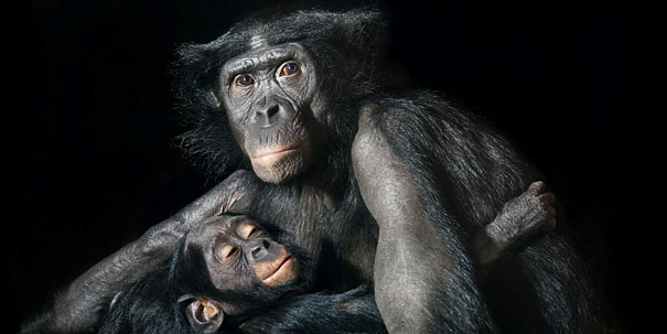 more than human animal photography tim flach 15 More Than Human Project by Tim Flach