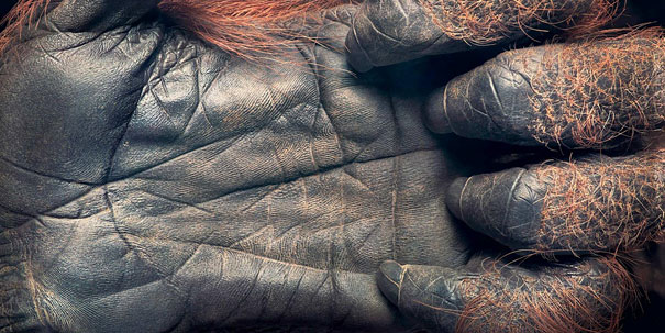 more than human animal photography tim flach 16 More Than Human Project by Tim Flach