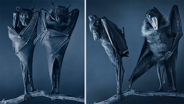 more than human animal photography tim flach 19 More Than Human Project by Tim Flach