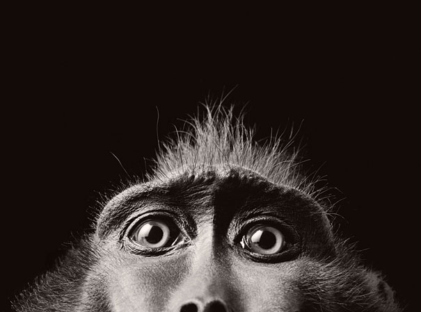 more than human animal photography tim flach 21 More Than Human Project by Tim Flach