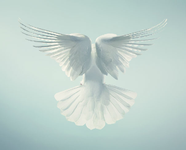 more than human animal photography tim flach 23 More Than Human Project by Tim Flach