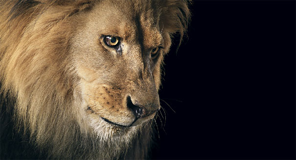 more than human animal photography tim flach 26 More Than Human Project by Tim Flach